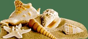 Shell Right
