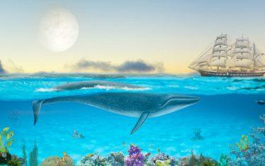 A Hide in the Ocean Floor